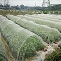 Insekt Vogel Net Barrier Gemüse Obst Blumen Anlage Gewächshaus Schutz Netting Ablehnen Moskito Blattlaus Pest Garten Netting-in Pflanzenabdeckungen aus Heim und Garten bei