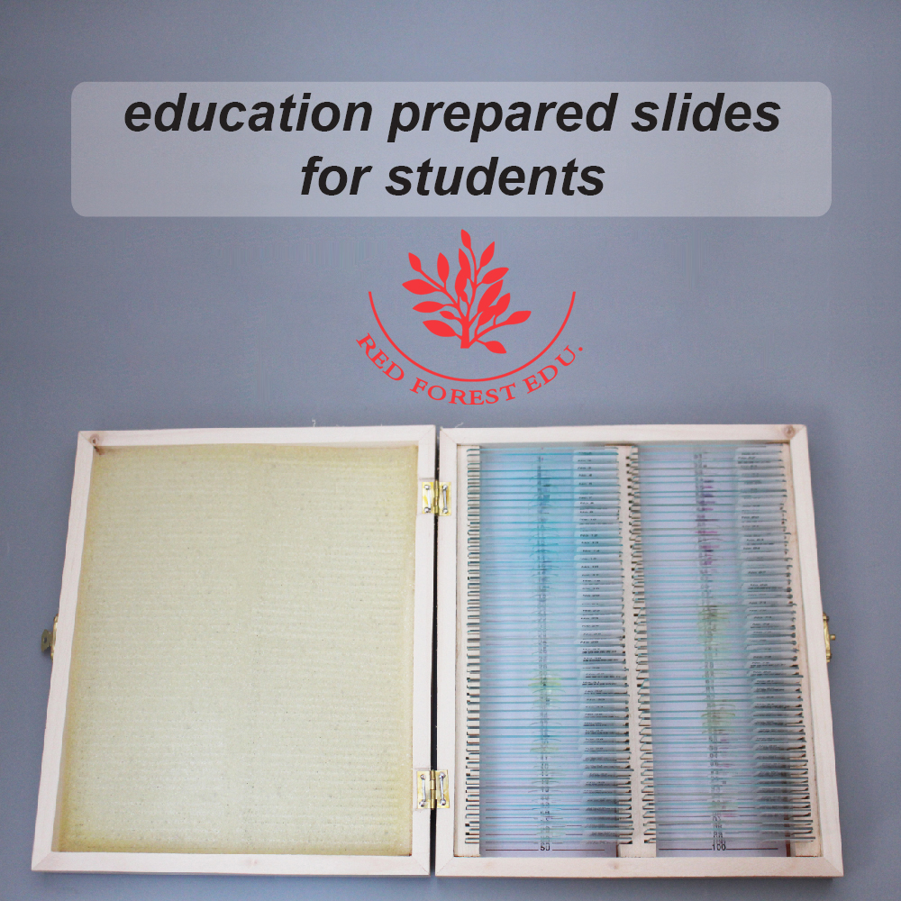 School Supplies education prepared slides for students microscope slides cell biology and genetics prepared slides