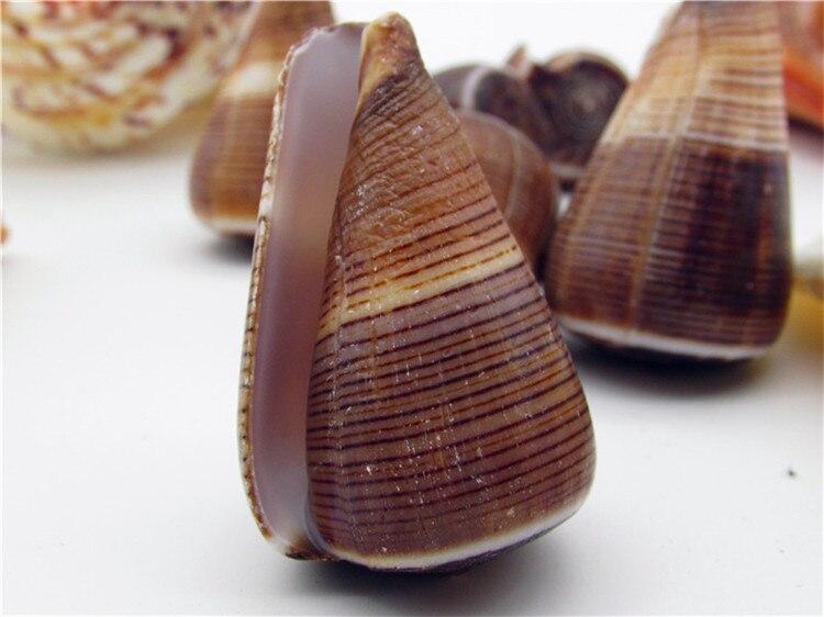5-8cm Natural Conch Shells Snails Seashell Aquarium Ornament Fish Tank Landscape Sea Snail Furnishings Wedding Home Decoration