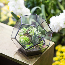 15cm Tabletop Display Succulent Fern Moss Flower Pot Air Plant Planter Fairy Garden Polyhedron Glass Geometric Terrarium Bonsai