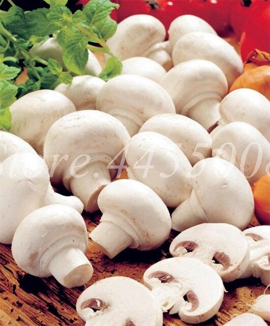 200 pz/borsa Bonsai Fungo Organico Divertente Succlent Impianto Al Coperto Commestibile Salute Verdure In Vaso Per Happy Farm Spedizione Gratuita