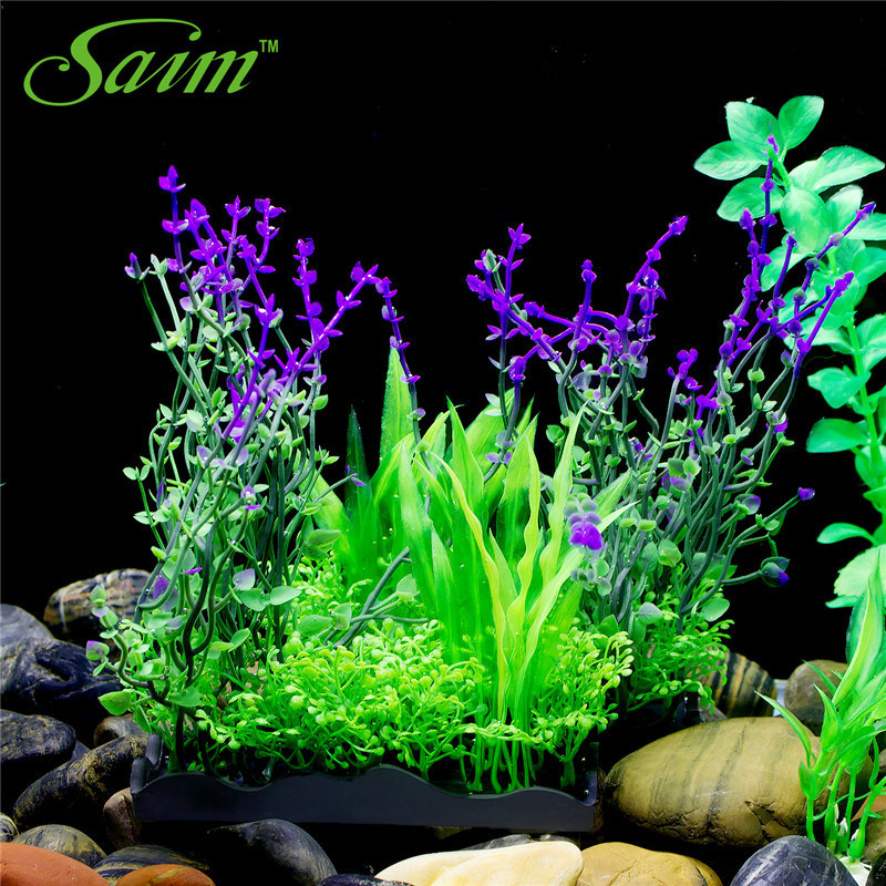 Aquarium Plant Packages Sale