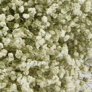 Image 5 - 1 Bundle 40 50CM DIY Gypsophila Flower Wedding Party Photo Props Pure natural plant Dried Flowers Cafe Library Home decoration