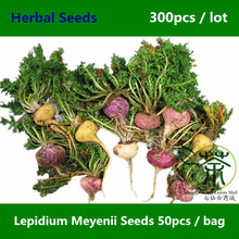 Medicinal Herb Lepidium Meyenii Seeds 300pcs, Herbaceous Biennial Peruvian Ginseng Seeds, Very Popular Root Vegetable Maca Seeds