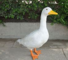 big Simulation geese toy polyethylene&furs white geese model gift about 45*20*55cm y0086
