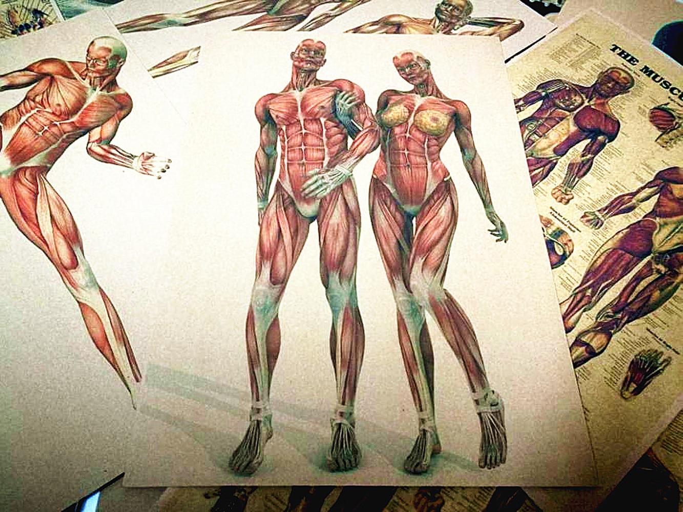 Human Muscle System Anatomy 3d Bodybuilding Art Vintage Kraft Paper