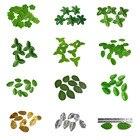 10g/pack Mini Green ...