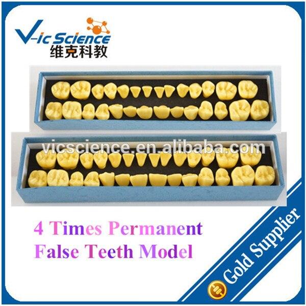 4 Times Permanent False Teeth Model Set4 Times Permanent False Teeth Model Set