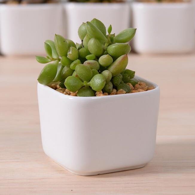 small white ceramic pots
