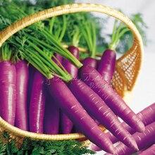 1 Package Vegetable – Carrot – Purple Haze – 400 Fresh Seeds High Germination