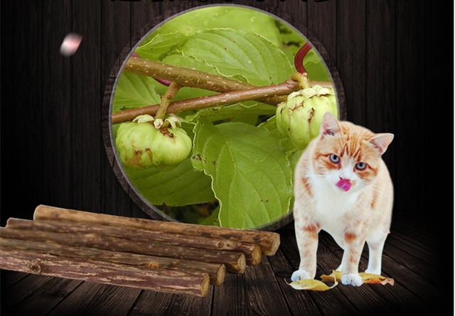 5 Pcs Cat Cleaning Teeth Sticks