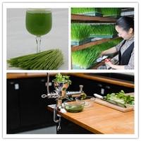 Home use hand wheat grass juicer extractor cucumber tomato potato juice squeezer