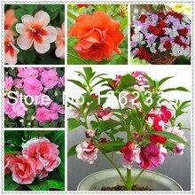 Vente En Gros Flowers Impatiens Galerie Achetez A Des Lots A