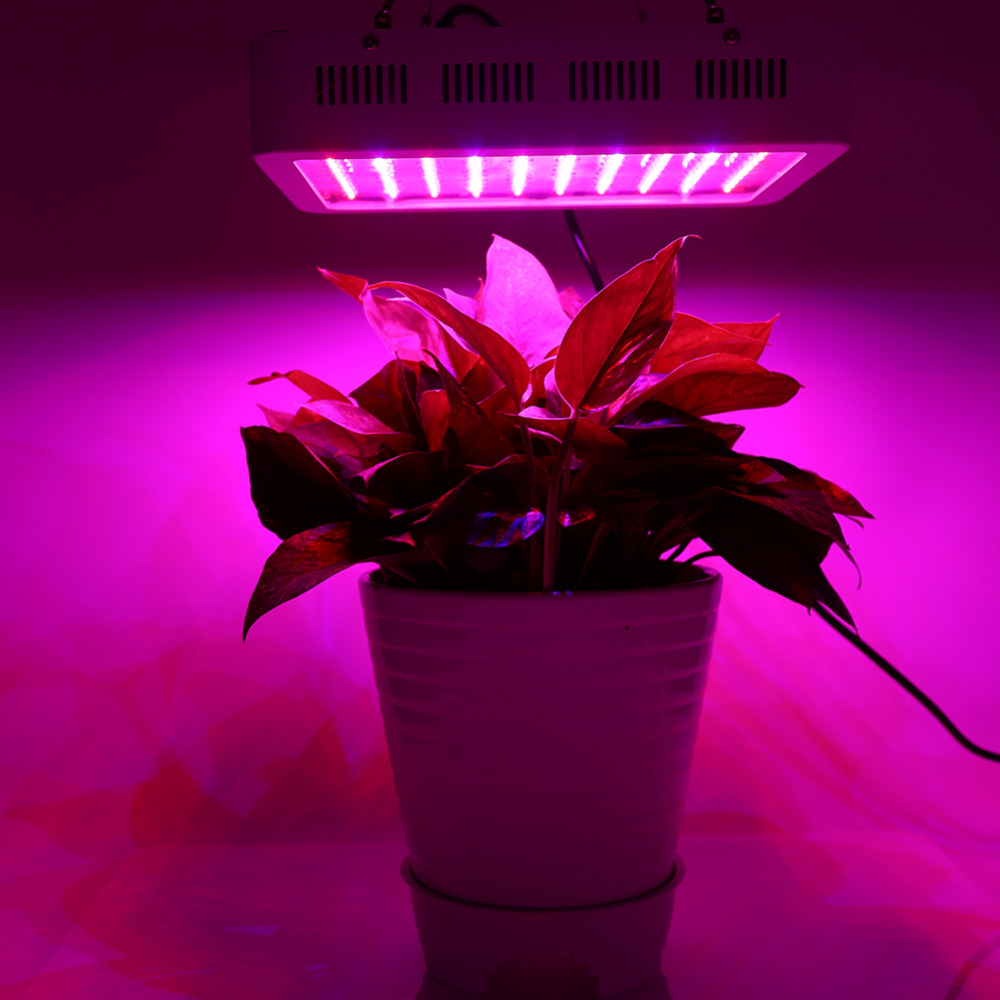 1000W Full Spectrum LED Plant Grow Light Veg Lamp Indoor Greenhouse Garden Growth Light 10pcs red maple seeds garden indoor beautiful potting plant