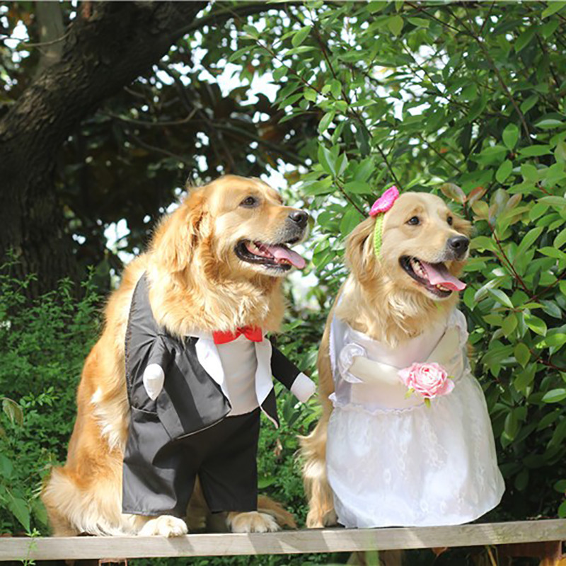 Dog Costume For Wedding Party (3)