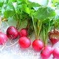 Большая Распродажа! Redskins Фрукты Редька Семена Овощных Культур Сад зеленый без ГМО Органических Овощей Редька Семян 60 Семян/пакет, #46 SRJX