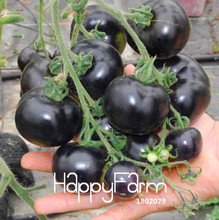 Time-Limit!!Super-affordable! 100 PIECES / Bag - INDIGO ROSE Black Tomato Seeds fruit vegetable seeds,#SQRZVF