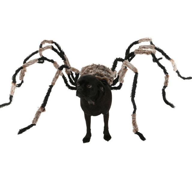 Funniest Halloween Spider Decoration Dog Costume DIY Large Spider Prop Homemade Dog Treats To Hand Out  sc 1 st  AliExpress.com & Funniest Halloween Spider Decoration Dog Costume DIY Large Spider ...