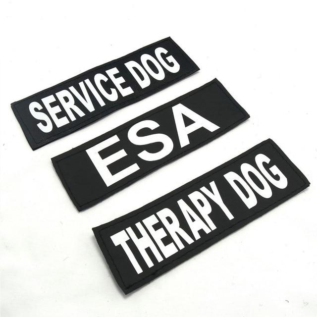arnes perro terapia