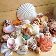 30 pçs/saco mix aquarium beach náutico diy conchas misturadas a granel aproximadamente 100g concha do mar