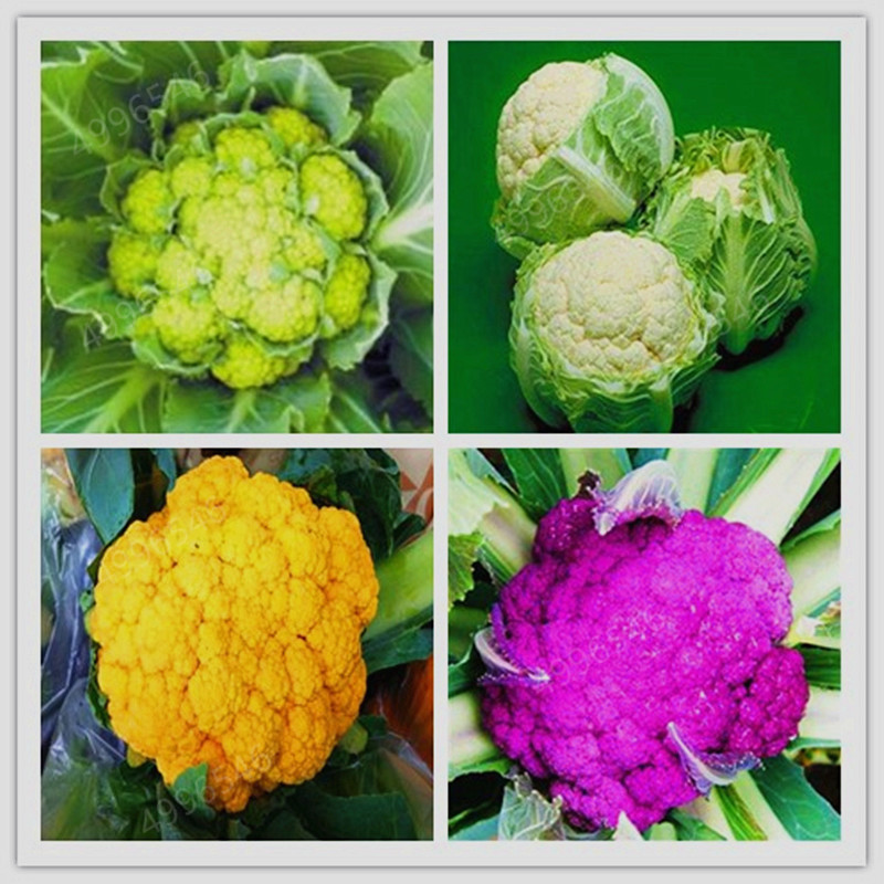 100 Pcs Rare Organic Romanesco Tower Broccoli Bonsai, Roman Cauliflower Fractal Heads Broccoflower Vegetables DIY Home & Garden