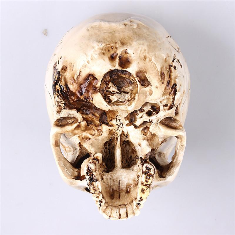 Cranio Humano Real