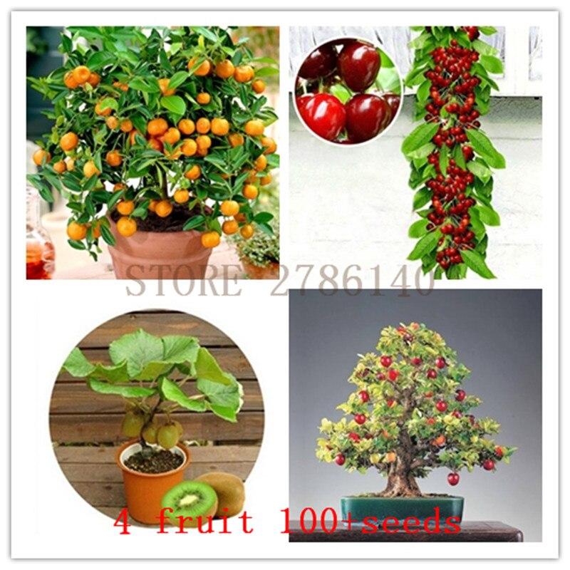 HOT SELL!4 kind fruit,bonsai fruit tree seeds,vegetable and fruit seeds total 100+seeds,apple +orange+cherries+kiw i