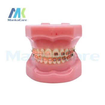 Manka Care -  28 pcs Tooth, half metal&half ceramic bracket Oral Model Teeth Tooth Model