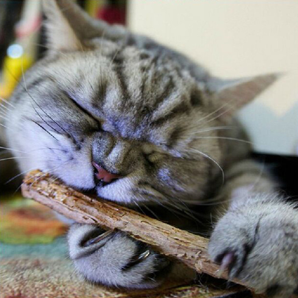 2 PCs Pet Cat Teeth Cleaning Chew Sticks Toys Pure Natural Catnip ...