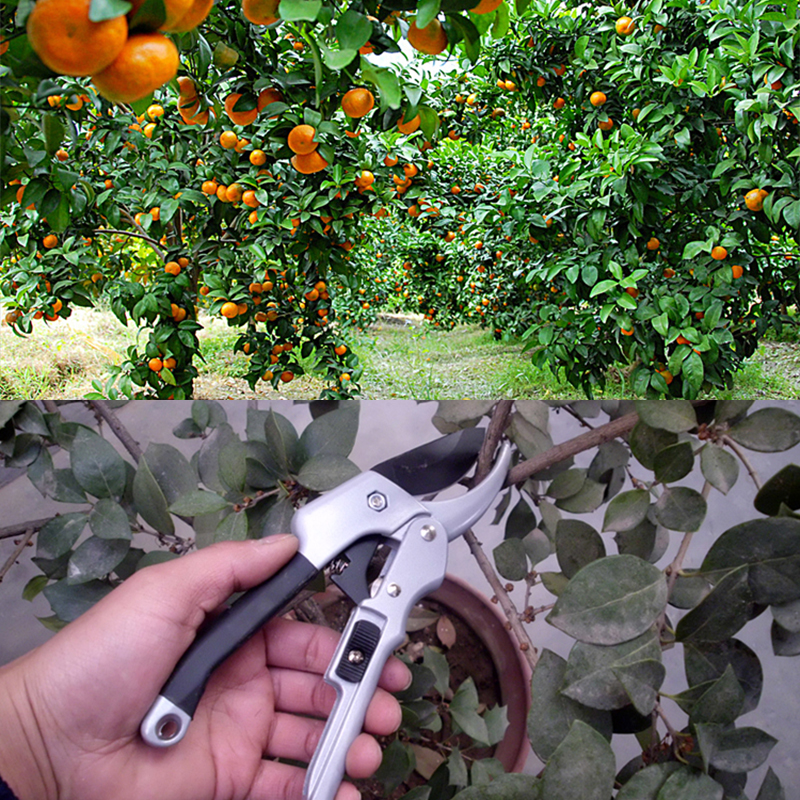 DTBird Labor-saving Gardening Scissor made of Carbon Steel for Bonsai Pruning and Flower Picking 2