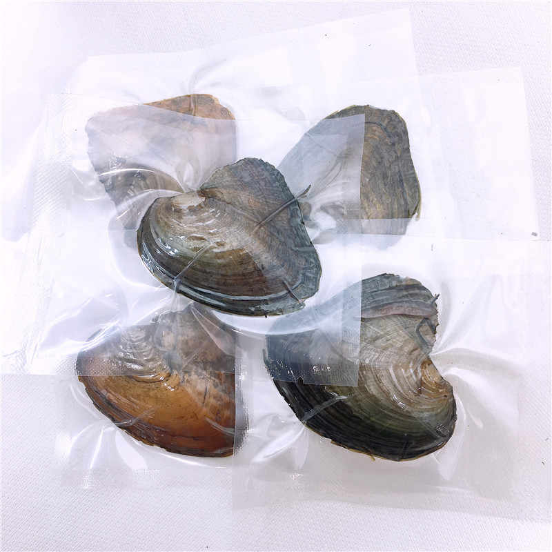 Factory Sale Wish Pearl Oysters Can with Real Rice Freshwater Pearl Inside, Vacuum-pack Oyster -Pearl Mussel Wholesale