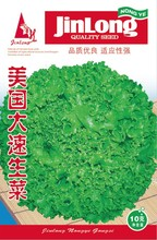 2000/pack America fast-growing Lettuce Seeds Good Taste Great Salad Choice ,easy To Grow Vegetable Bonsai Diy Home & Garden
