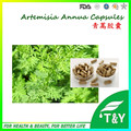 A la venta! Artemisia annua natural puro orgánico Cápsula con el envío libre, 500 mg x 1000 unids