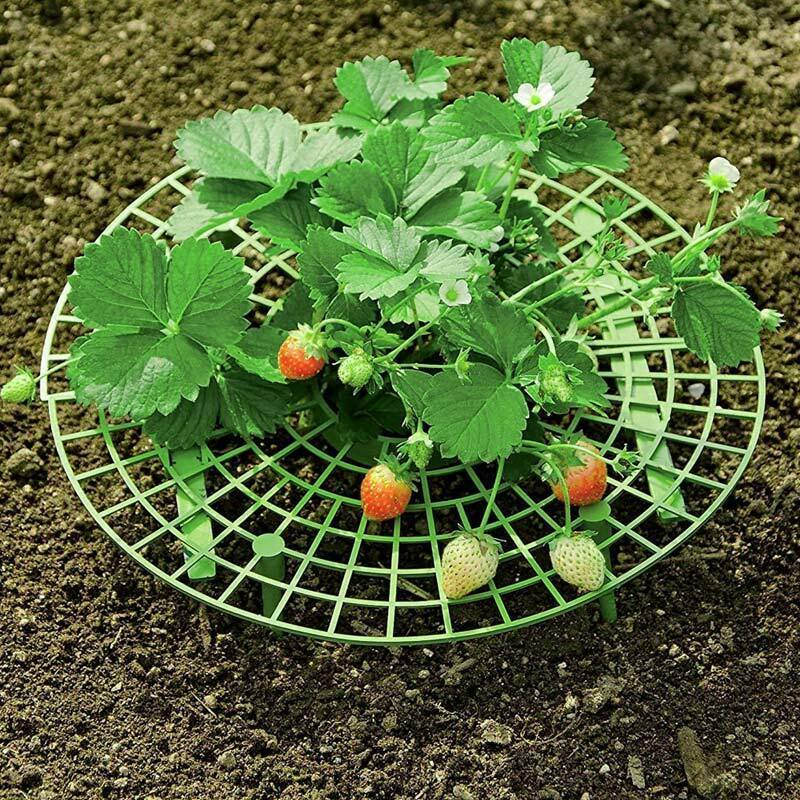 Plant Support Rack Strawberry Stand Planting Rack Fruit Support Plant Climbing Vine Props Flower Pillar Gardening Bracket