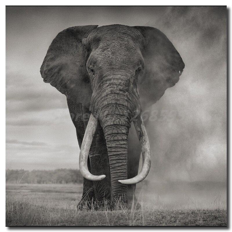 Wild Elephant Print 1