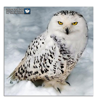 DIY Diamond Painting Animals Cross Stitch 5d Diamond Embroidery Owl Pictures Of Rhinestones Hobbies Crafts Embroidered