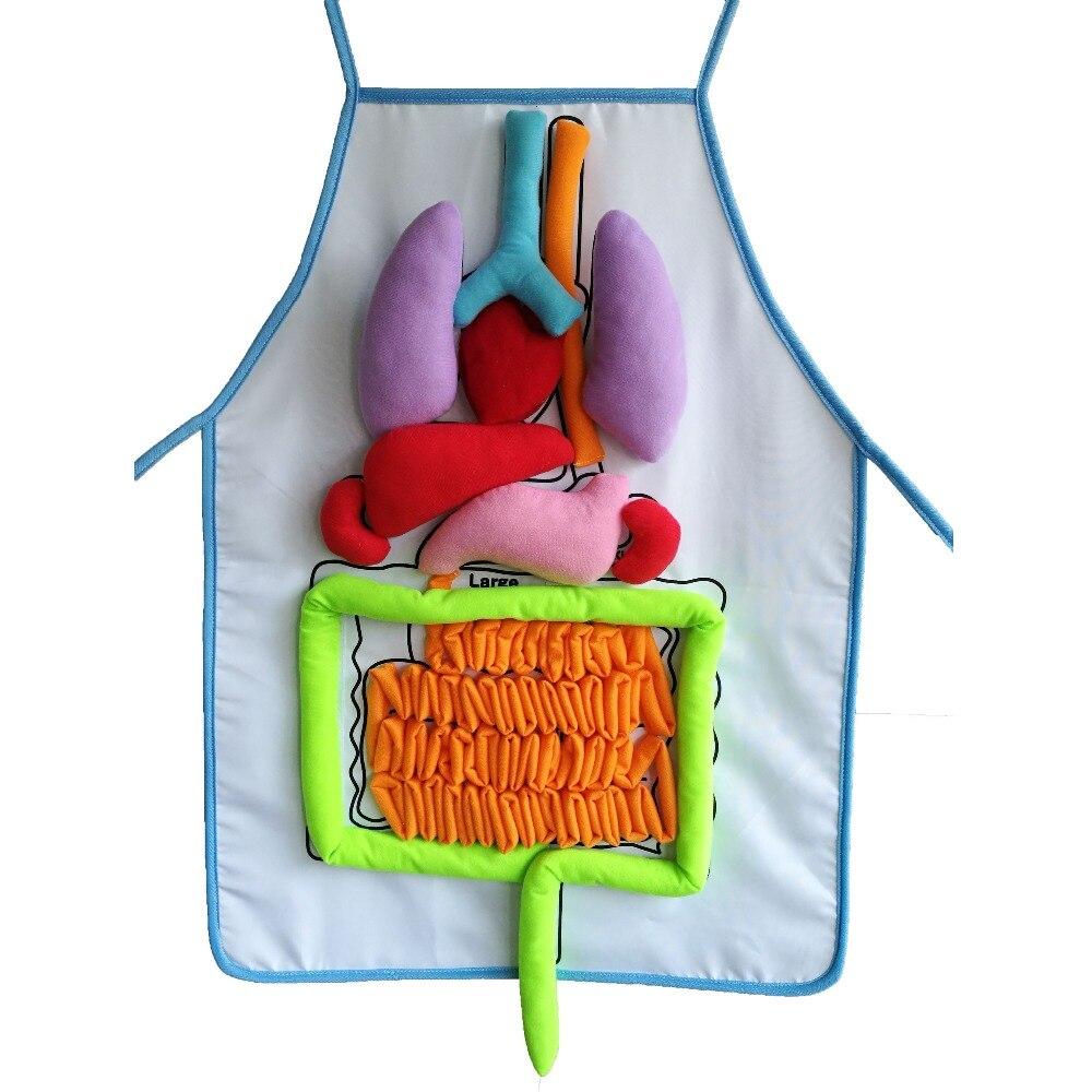 Educational Insights Spielzeug für Kinder Anatomie Schürze ...