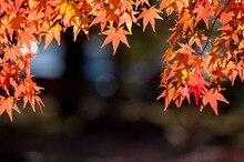 5x7ft Оптовая Декорации Печатных ткань Фотографии фоны цветы природные Пейзажи фото backdropsD-4440