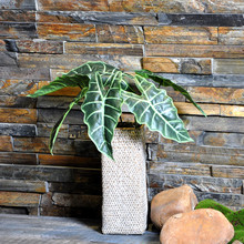 Aro Leaves Tree Artificial Home Decoration Indoor Plants