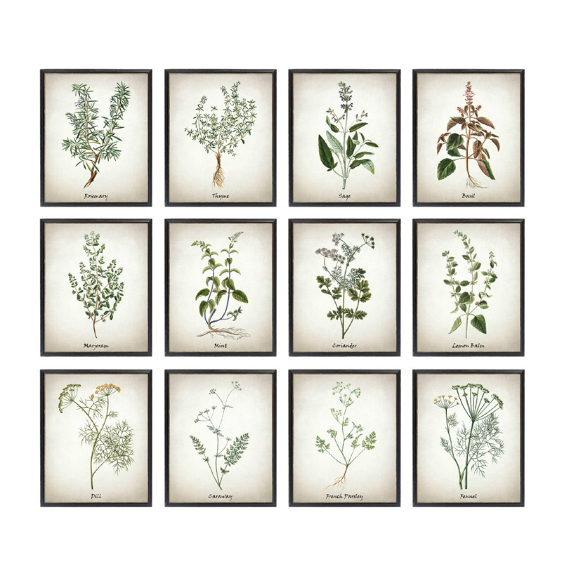Herb Canvas Art Painting Vintage Herbal Illustrations Posters And Prints Culinary Herbs Botanical Kitchen Wall Art Picture Decor