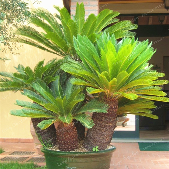 how to add iron and magnisium to potted palms