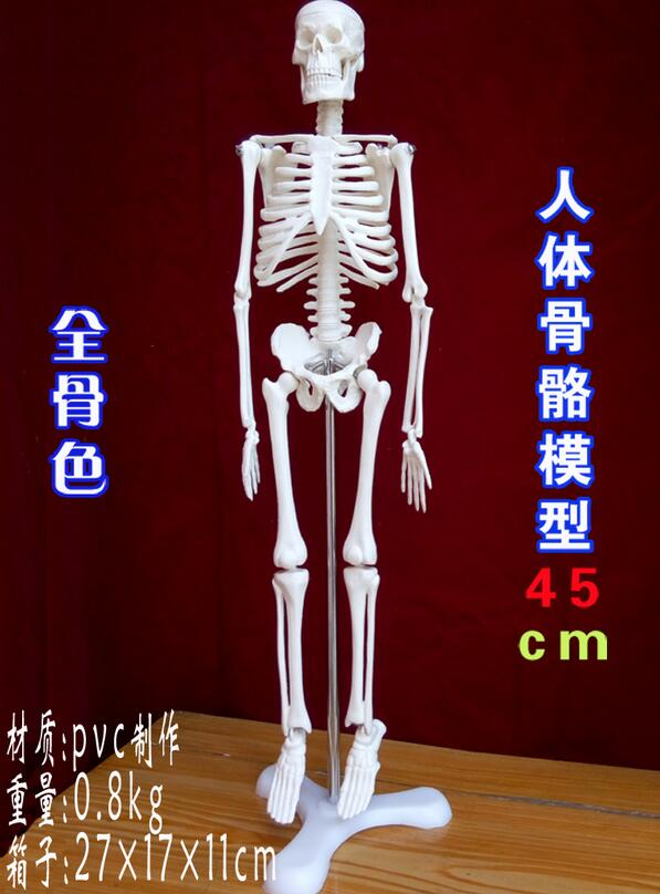 New 45cm human skeleton model teaching aid Mini - Skeleton mannequins Learning Resources ...