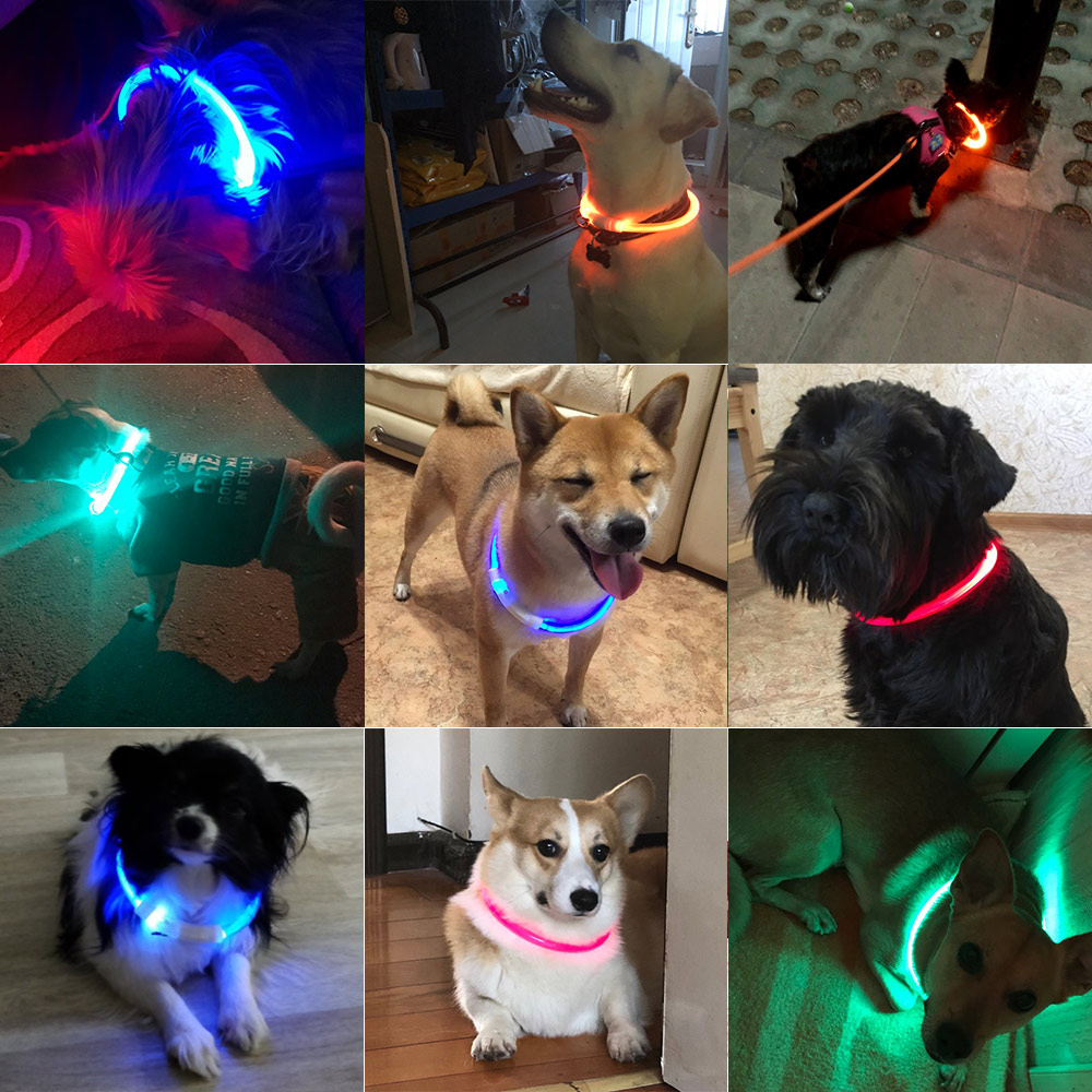 Image 2 - USB Charging LED Dog Collar Glowing Light Cuttable Collar For Dogs Cats Puppies Cool Dog Supplies Cat Supplies Products For Dogs-in Collars from Home & Garden