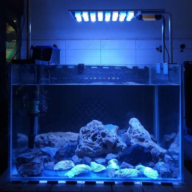 de crecimiento luz planta coral Bajo costo Bombilla E9W2IDH