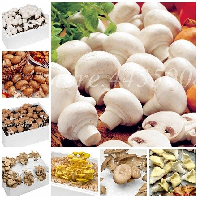 200 pz/borsa Bonsai Fungo Organico Divertente Succlent Impianto Al Coperto Comme