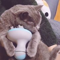 Automatic Rotate Massager For Cats Waterproof Inteaction Pet Cat Toy Cat Head Massager Electric Paw Shape