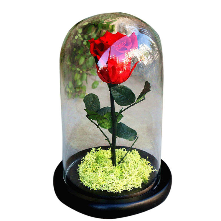 Disney Decoration Birthday Gifts Beauty and The Beast The Little Prince Glass Cover Fresh Preserved Flowers Rose Children Toys beauty and the beast teacher s book книга для учителя