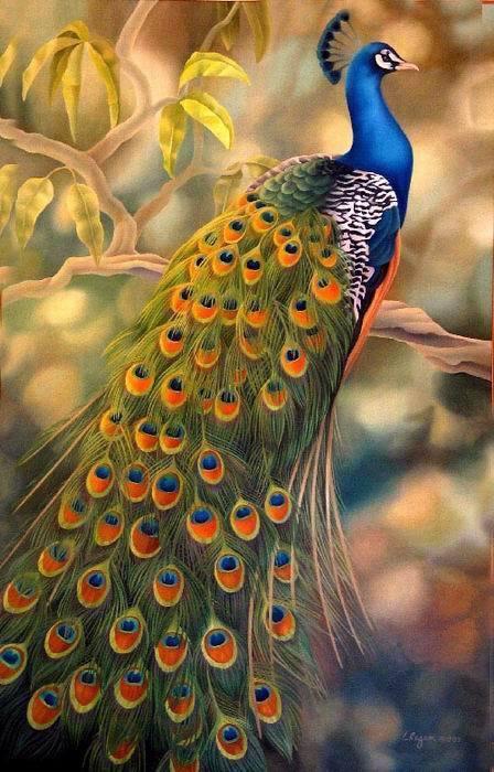 Peint à la main animaux peinture à l'huile toile décor mural beau paon 3 24X36