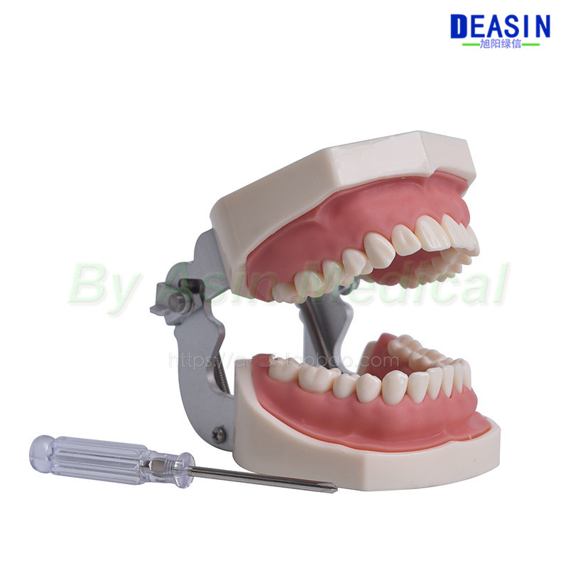 2018 new arrival Oral preparation model Simulated tooth model exercise Preparation of dental granules цена и фото