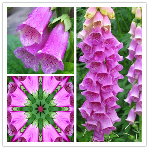 Popular Common Flowering Plants Buy Cheap Common Flowering